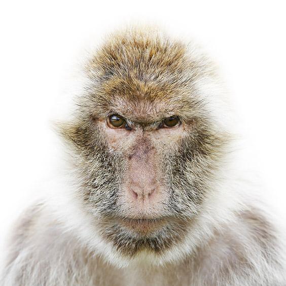 Morten Koldby makes remarkable photographs of animals. http://www.koldby.com/