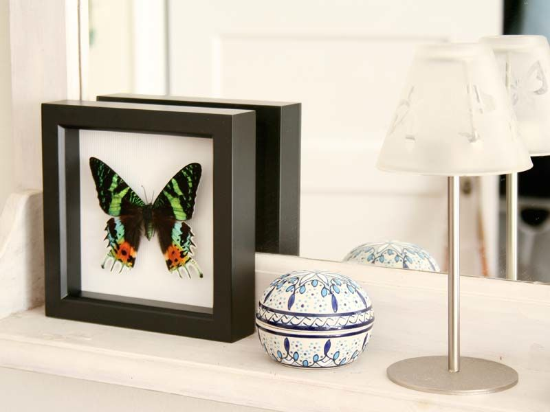 The only Green Certified insect display business.  Fantastic exotic butterflies and moths available from www.bugunderglass.com.
