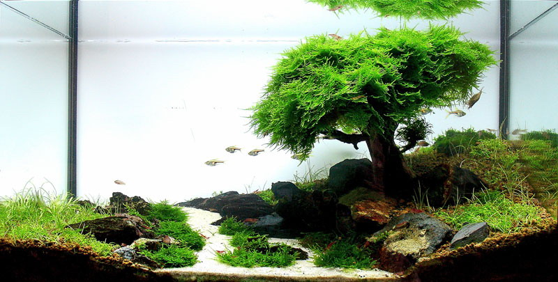 Amazing aquascapes by IT manager Filipe Oliveira from Porto, Portugal.