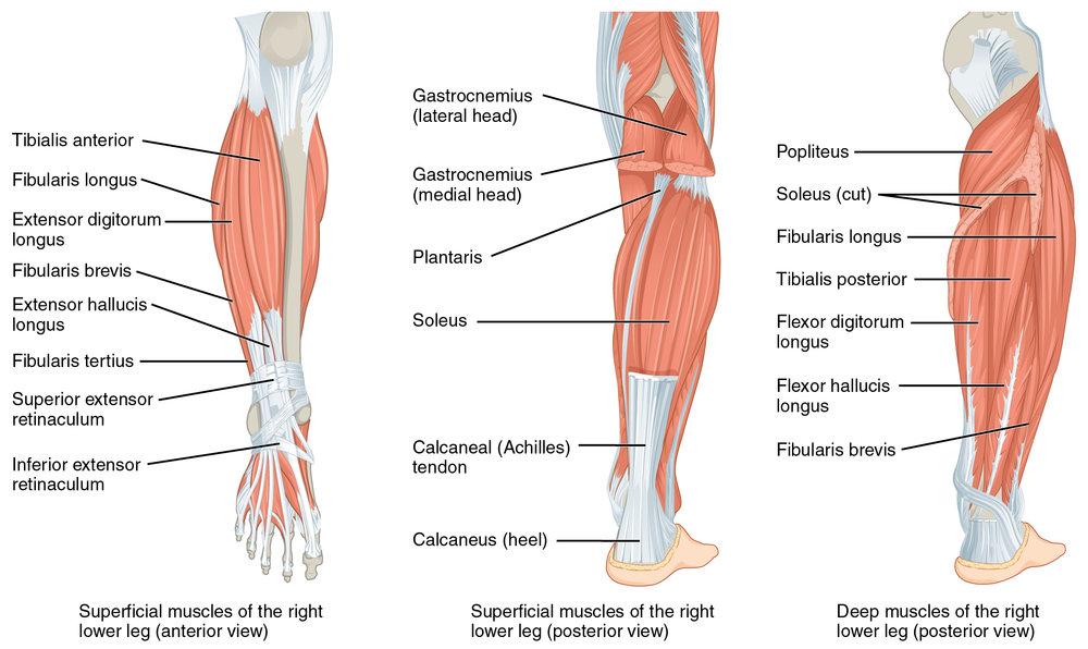 Injury Proof Knees Take Flight Fitness