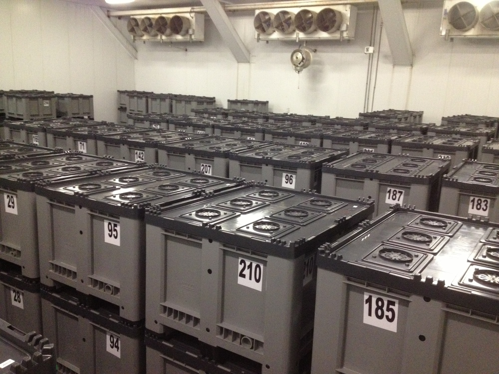 Extend Your Sales Times   Use your existing cooler space with JMT controlled atmosphere bins to extend storage time and increase sales/ delivery dates.