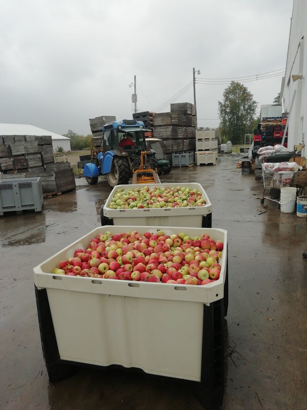JMT US_CA Bin 730_pick up apples.jpg