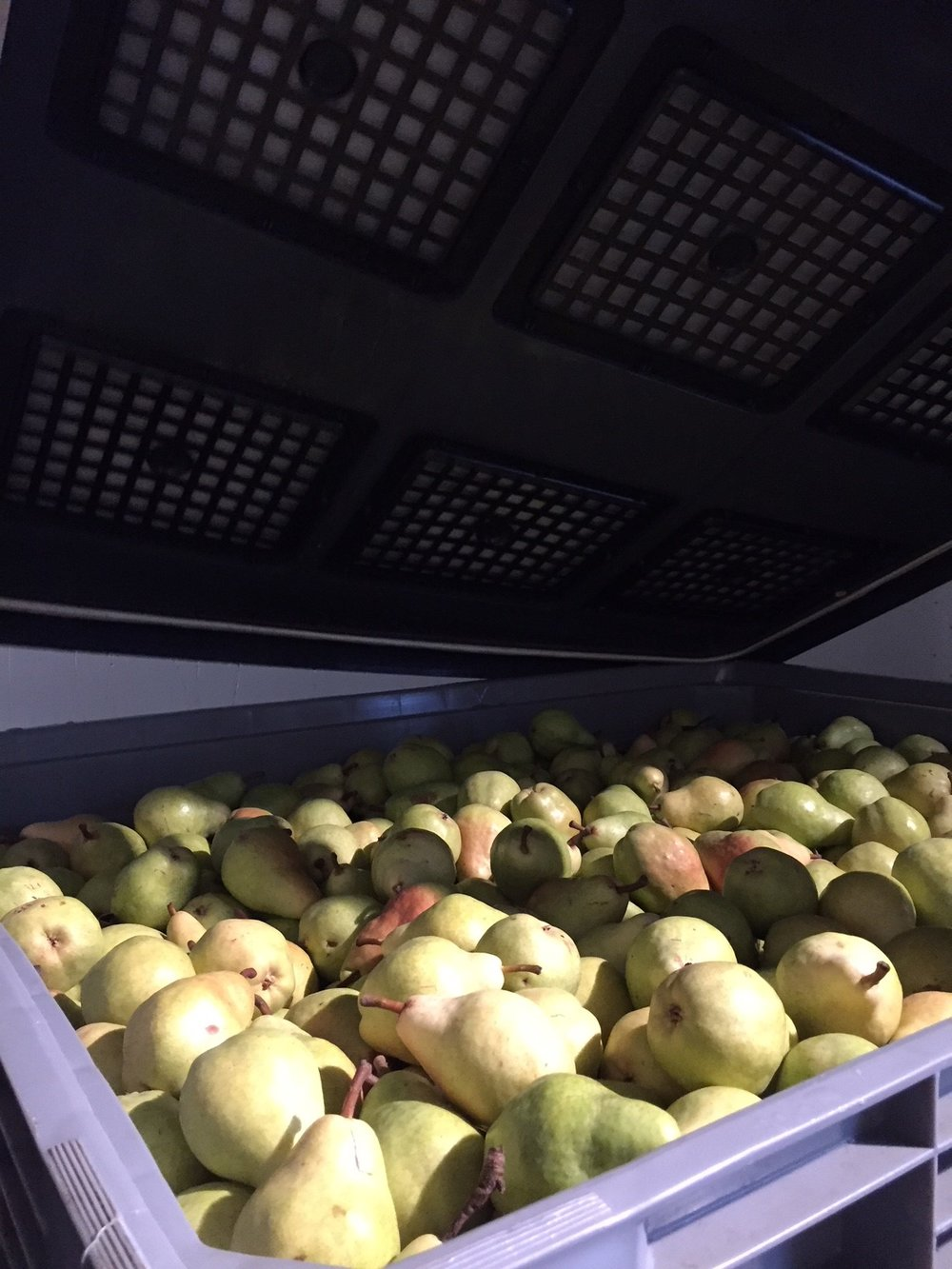 JMT US_pear storage.JPG