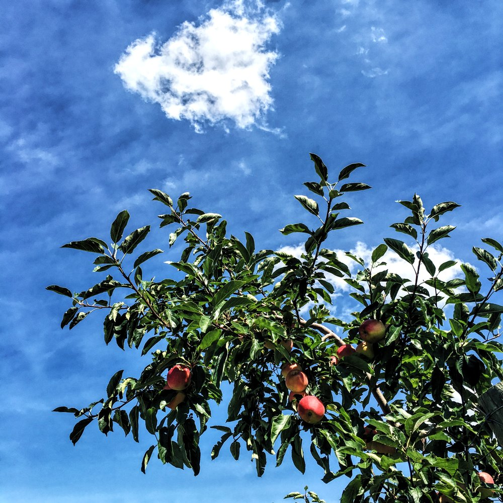 Weaver's Orchard Sky