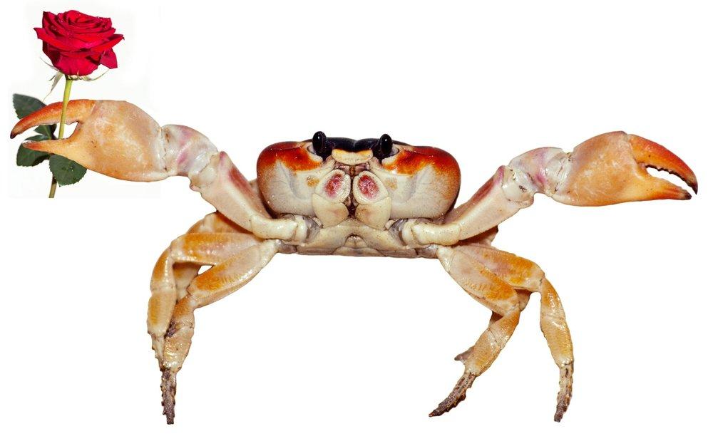 crabRose.jpg