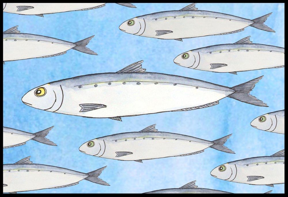 The Sardine