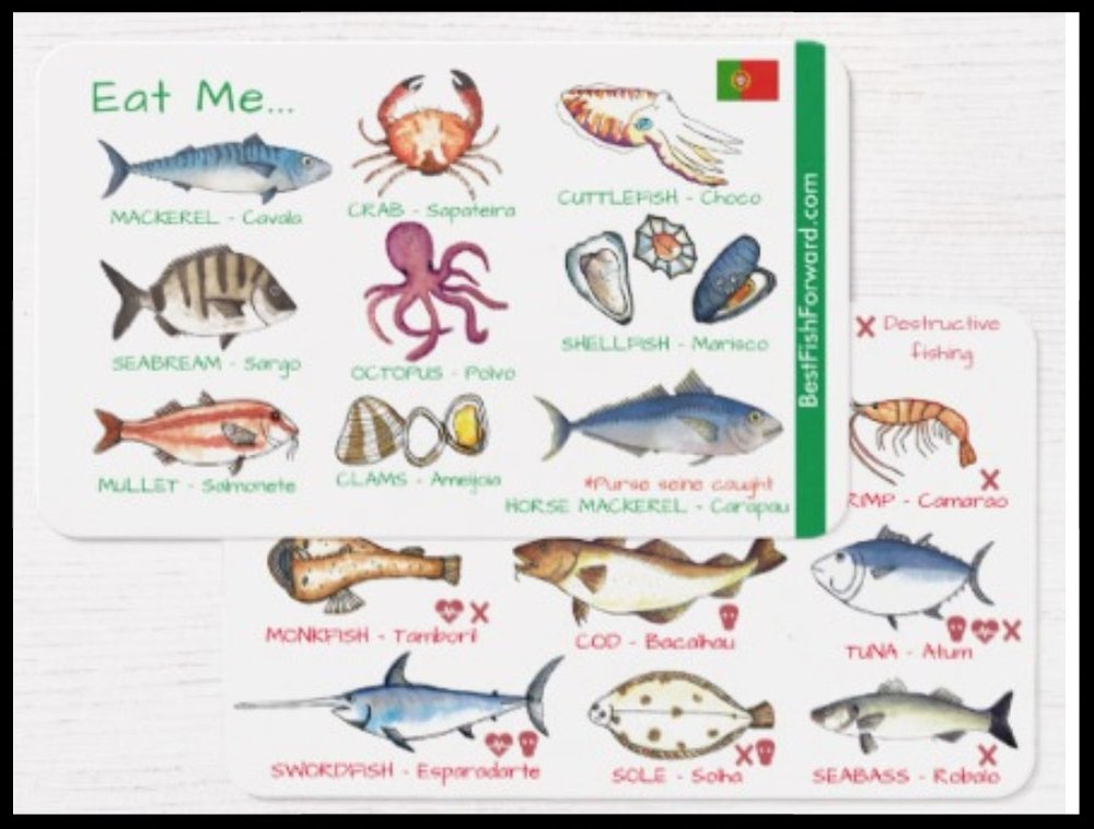 With yourhandy-dandy, wallet-sized,Best Fish Forward-createdPortuguese fish guide you'll be ready to face any menu! - (Get in touch if you still need yours... )