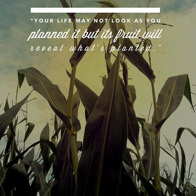 In Iowa we know Jesus' words to be true - that you can tell a tree by its fruit. In our lives the things we plant (invest in and take time to cultivate) are of such importance. What harvest do you want to see? Further, if you are a follower of Jesus, what may he be be calling you to plant more intentionally? (From Sunday's message, Fruitful No.1)
