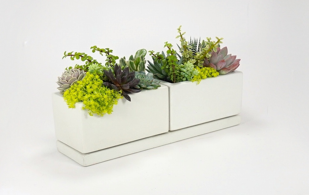 concrete planter set set of planters w drainage tray available in 3 colors graphite