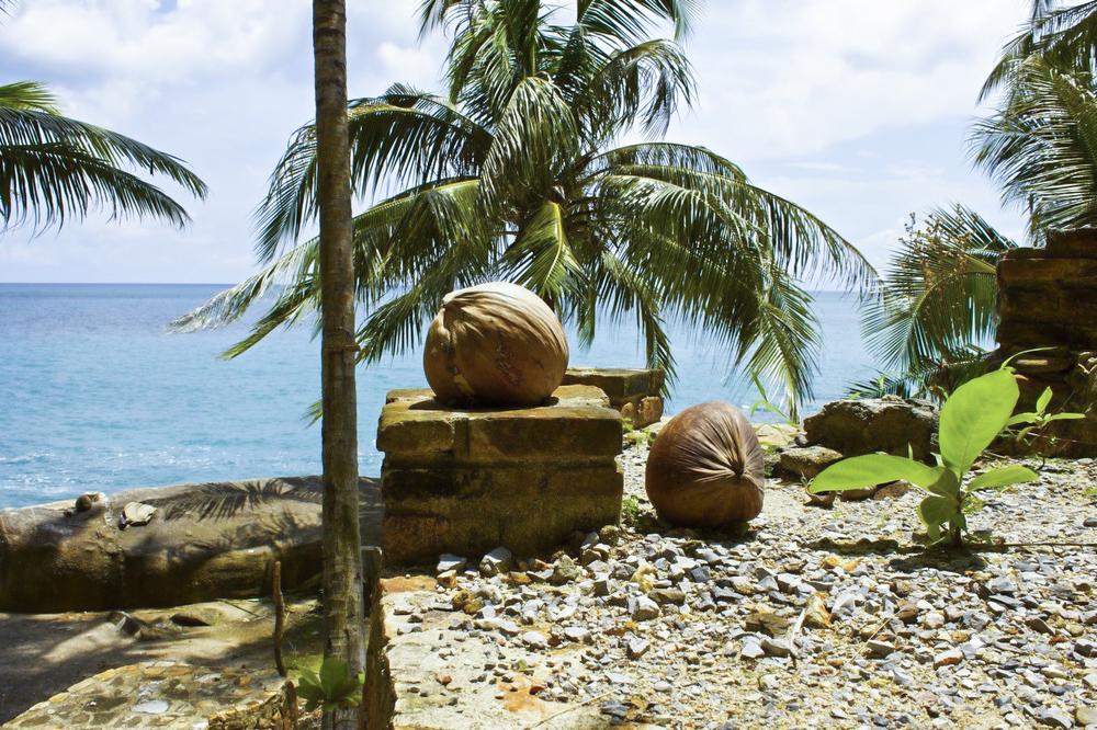Thai Coconuts.jpg