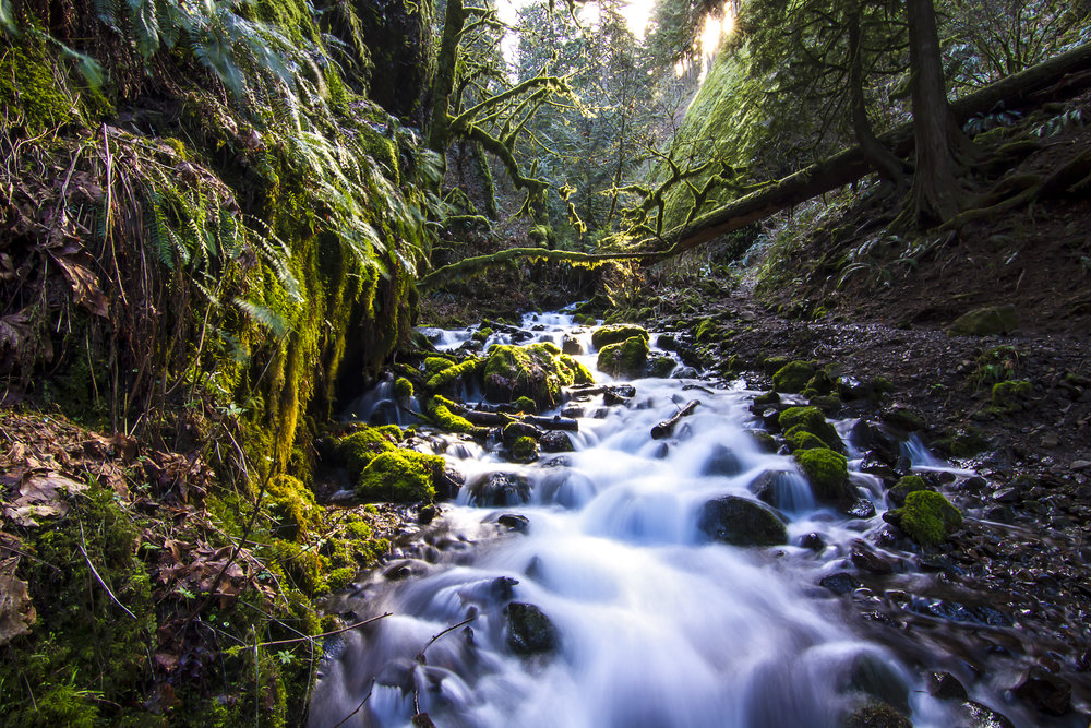 Latourell Creek, OR