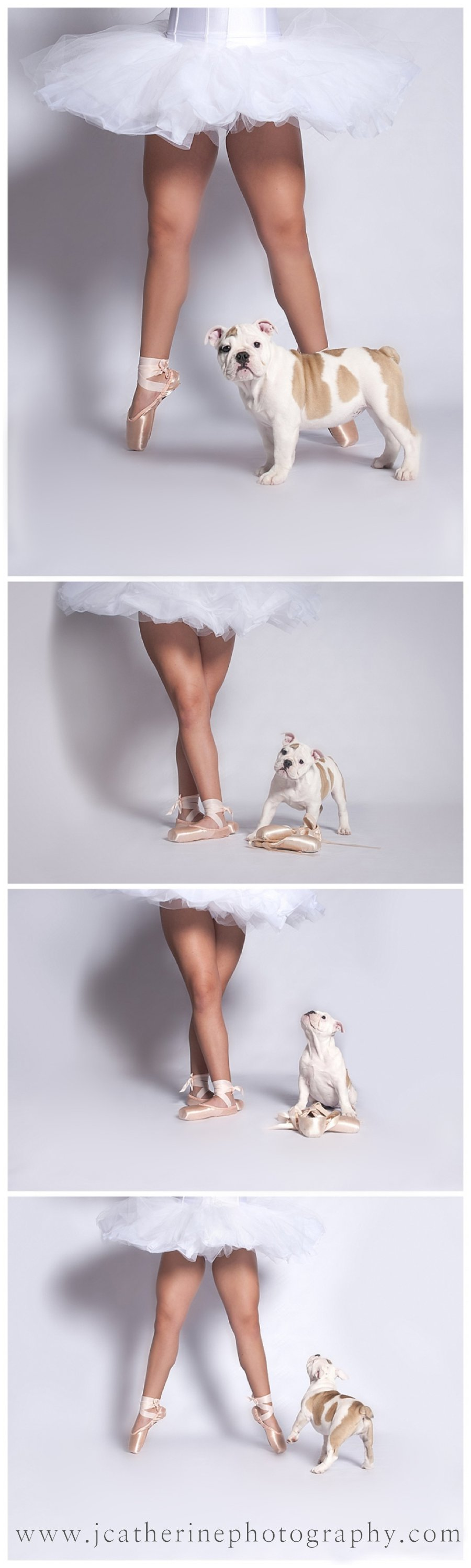 Mabel-dancing-ballerina-bulldog-j-catherine-photography-greenville-south-carolina.jpg