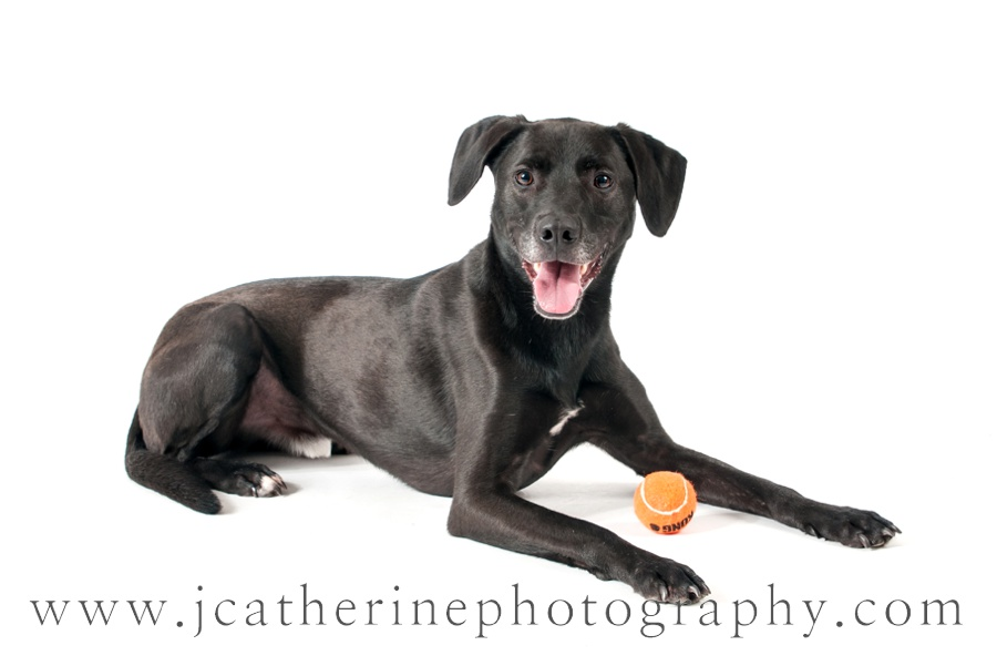 dog photographer | J Catherine Photography | Greenville SC Pet Photographer
