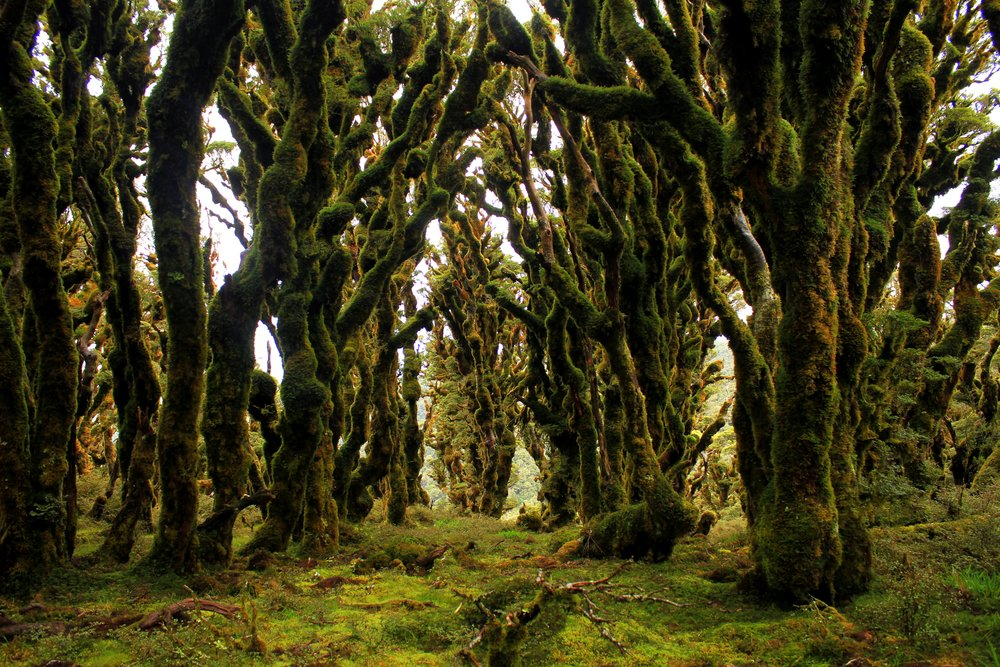 New Zealand's Goblin Forest