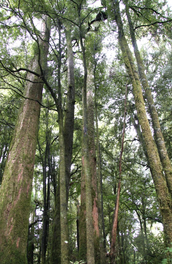_Purerora_timber_trail_075.jpg