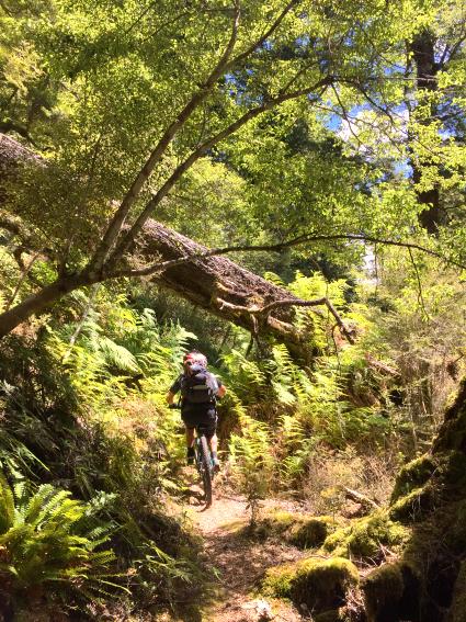 Mountain biking New Zealand - Te Iringa Trail