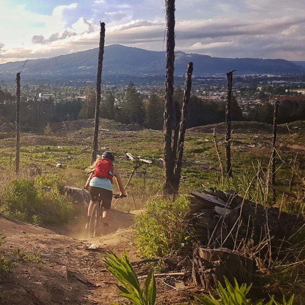 Mountain biking Redwoods, Rotorua