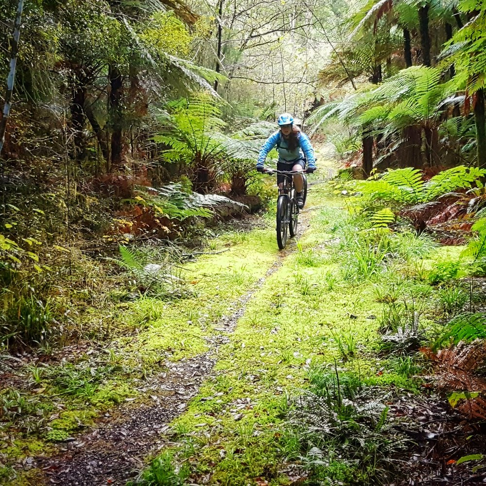 Whirinaki Forest mountain biking