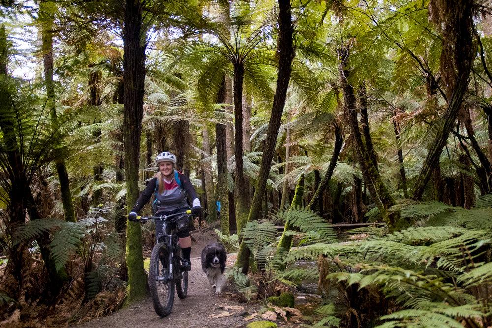 Guided mountain biking Whirinaki Forest