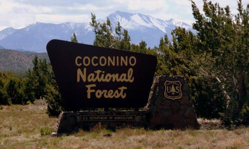 Coconino_National_Forest_Flagstaff_md.jpg