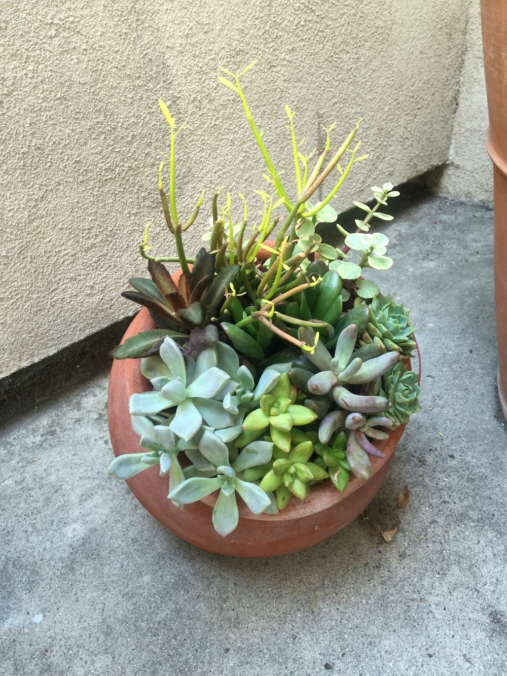 Already planted from Home Depot. But we love the pot and these succulents!