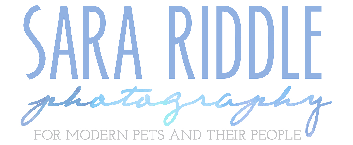 Northern Virginia and DC Pet Photography by Sara Riddle