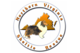 northern virginia sheltie rescue.jpg