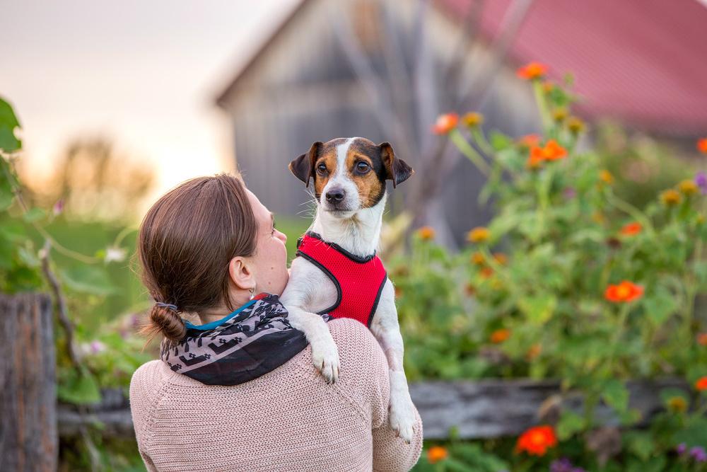 dog-photography-va.jpg