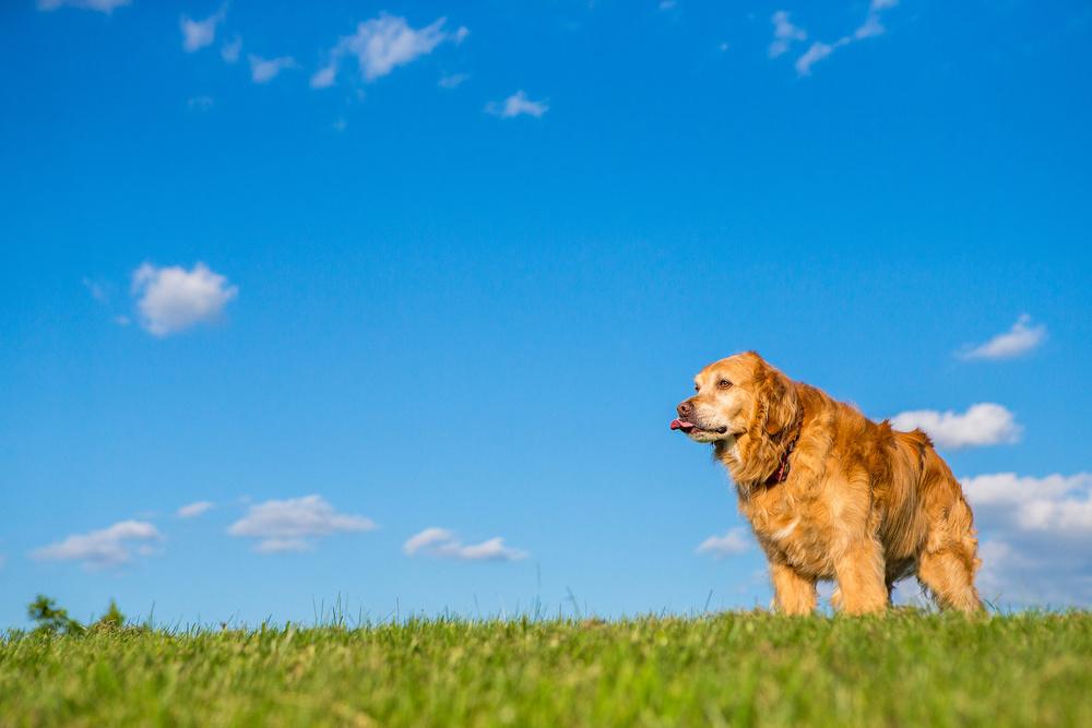 washington-dc-dog-photographer.jpg