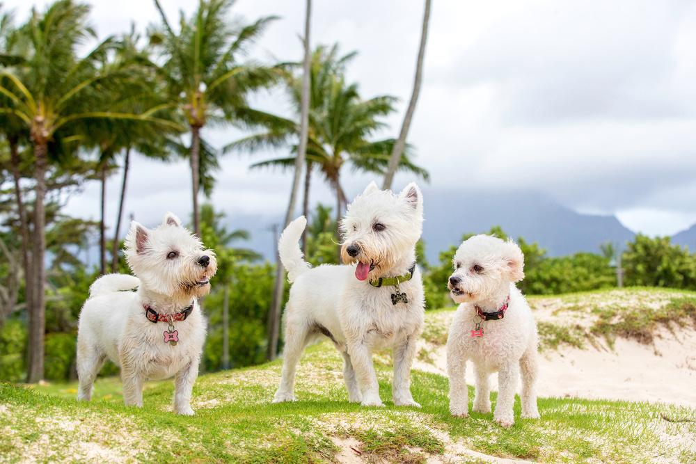 dog-photography-dc.jpg