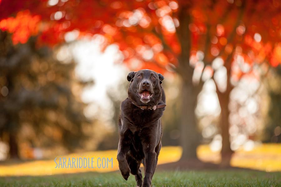 pet-photographer-dc003