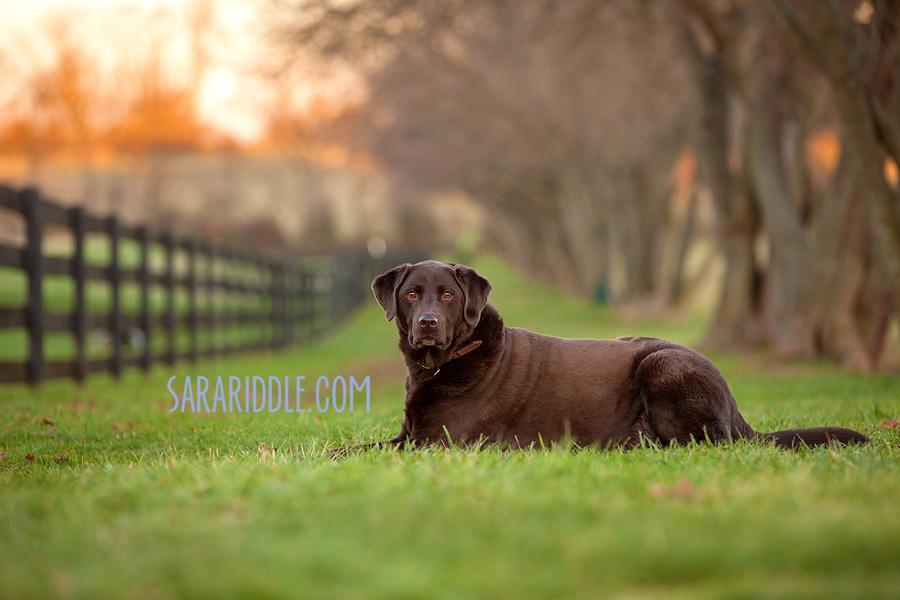 pet-photographer-dc012