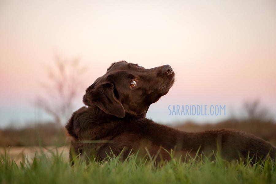 pet-photographer-dc016