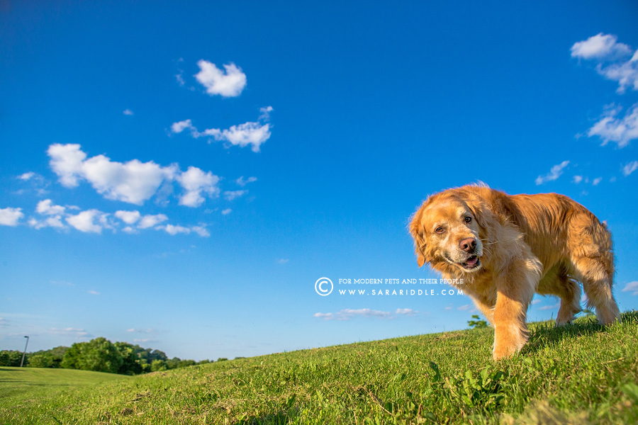 va pet photographer