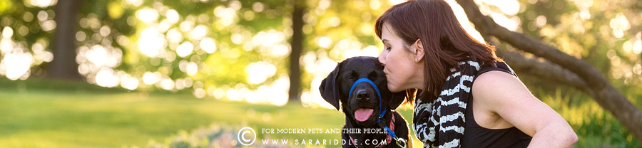 best pet photographer dc