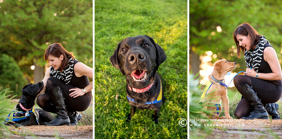 dog photographer maryland