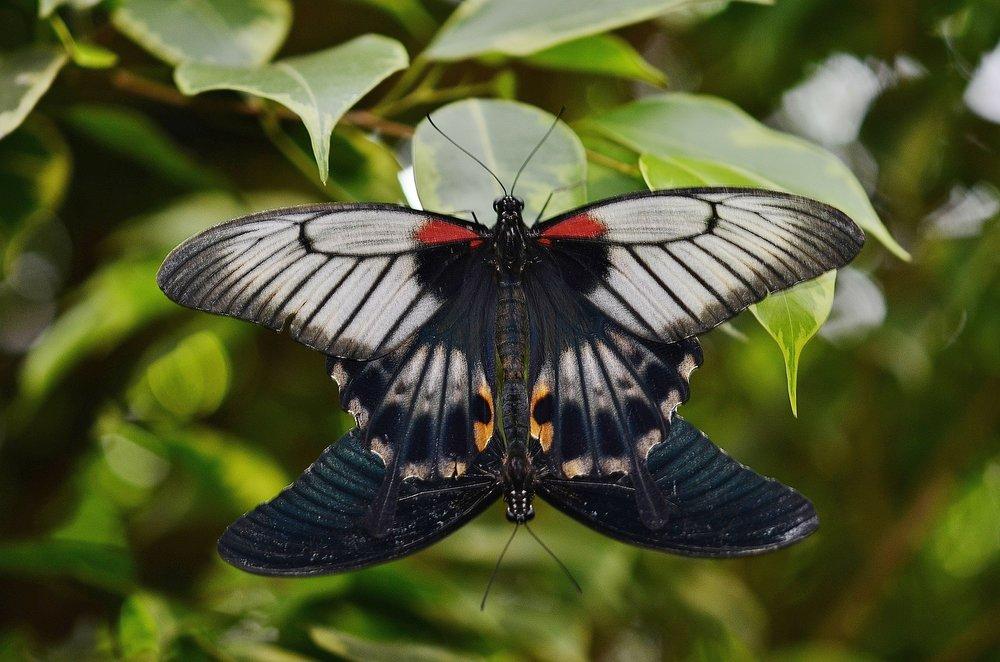 butterfly-329054_1920.jpg