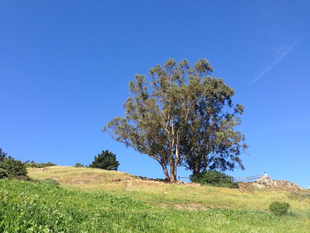 San_Francisco_Billy_Goat_Hill_Park_4