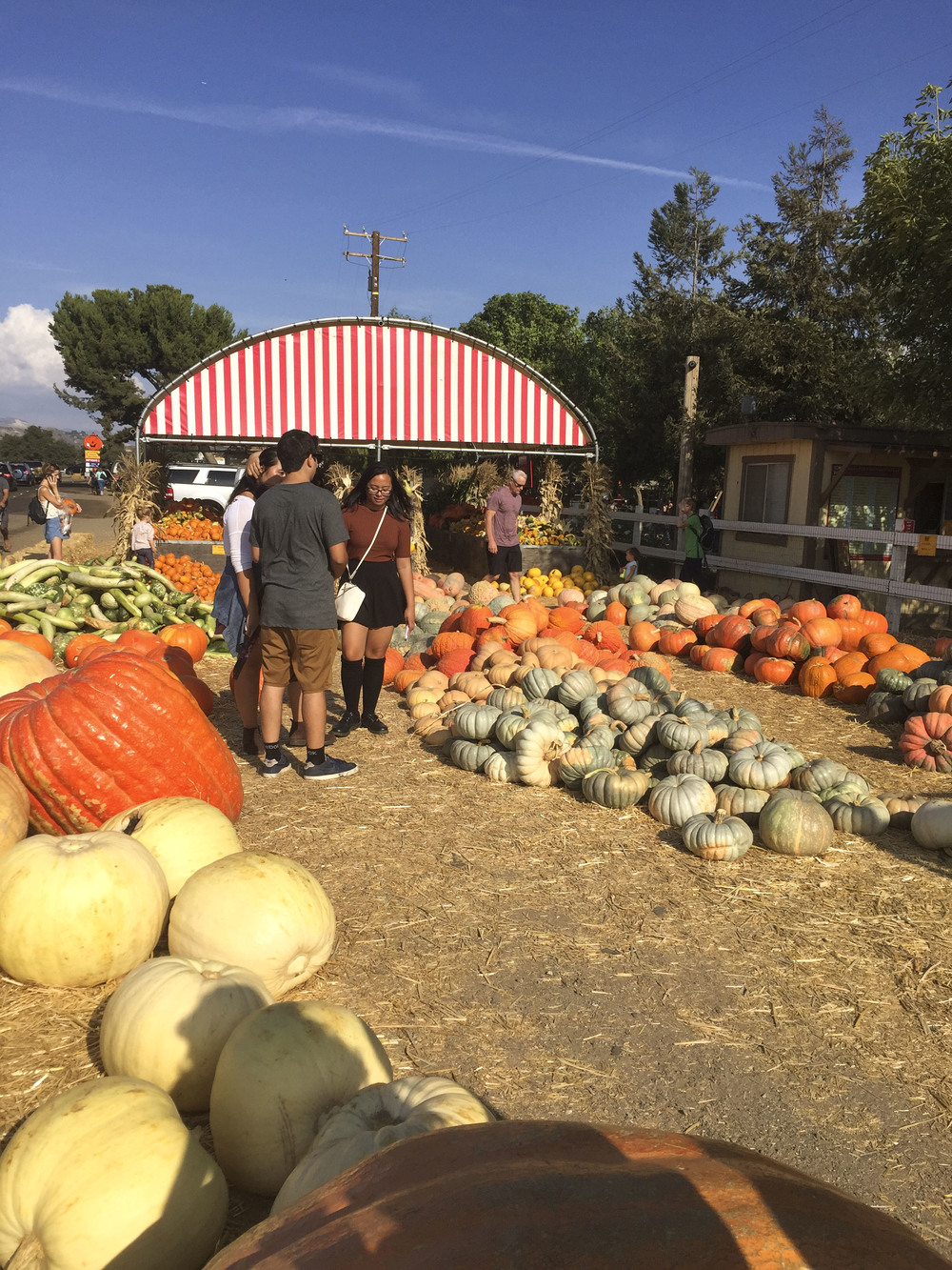 Los_Angeles_Pumpkin_Patch_2