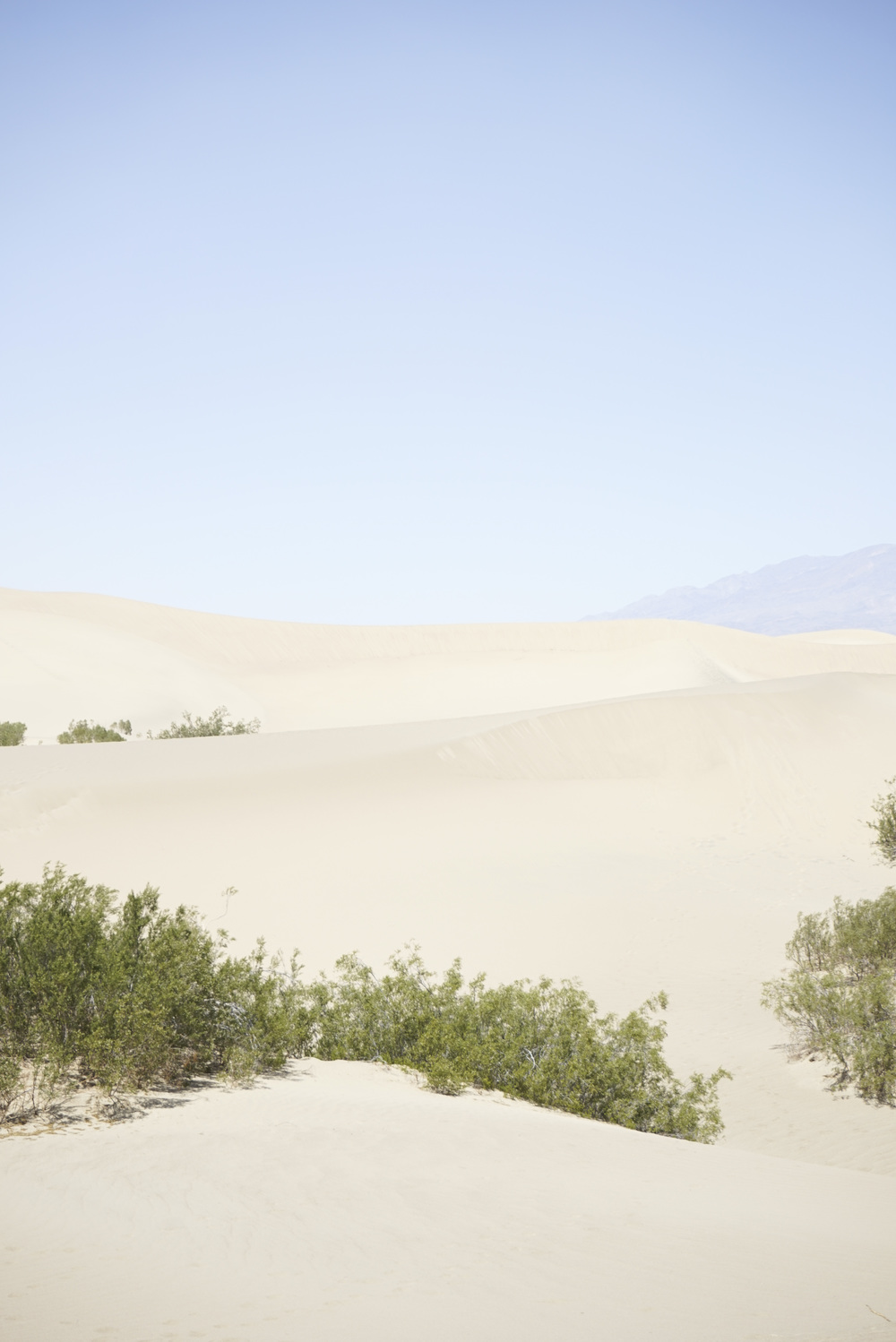5 Reasons to Visit Death Valley Now - Shannon Did What?