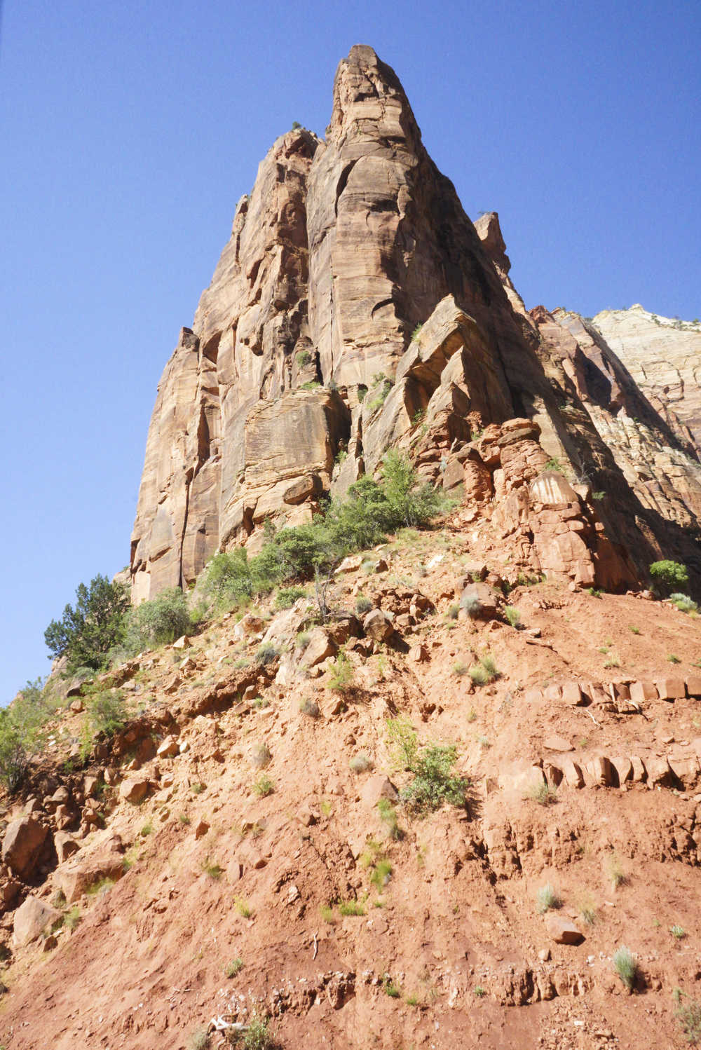 Zion National Park - Shannon Did What?