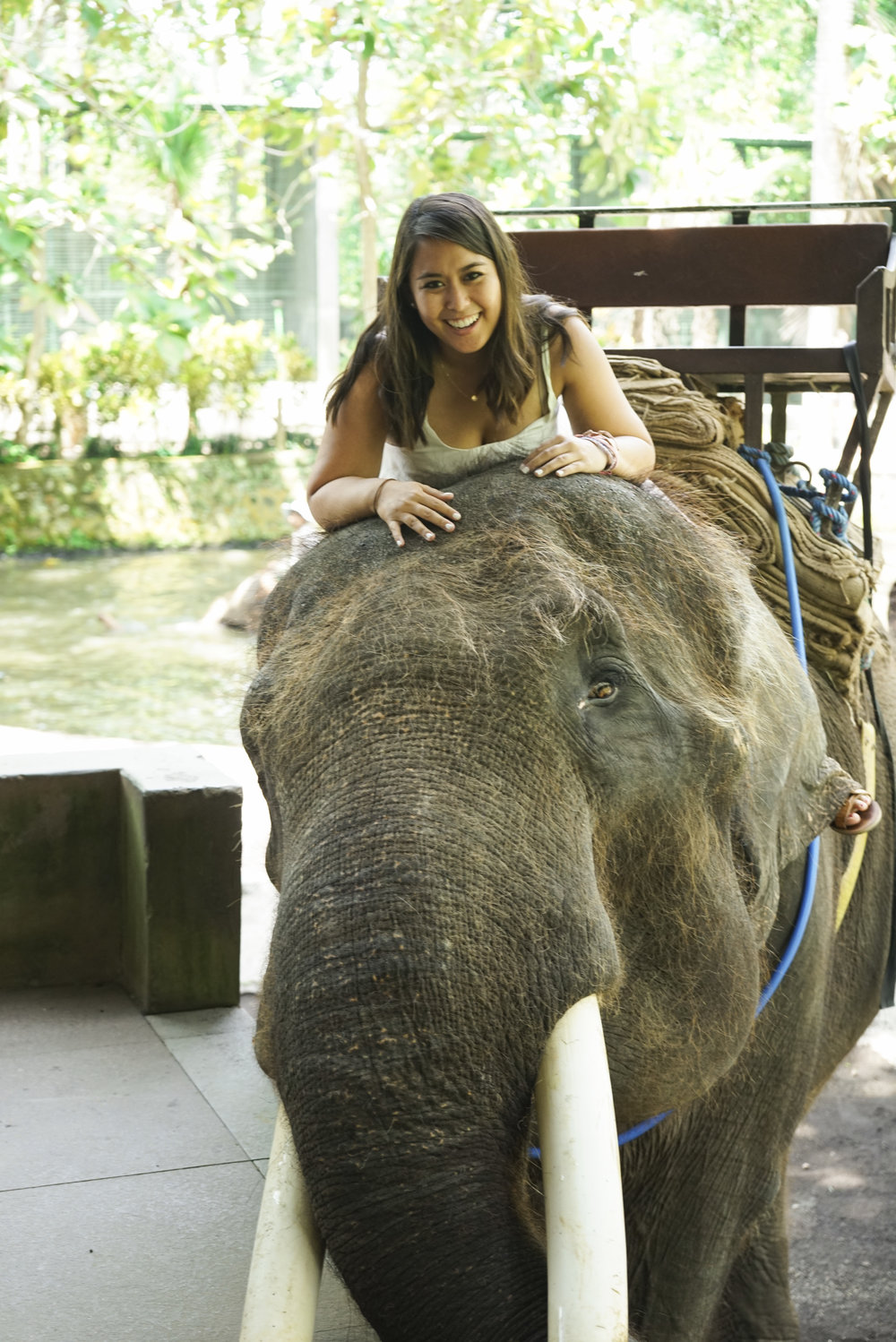 Bali: Ultimate Guide to Ubud - Shannon Did What?