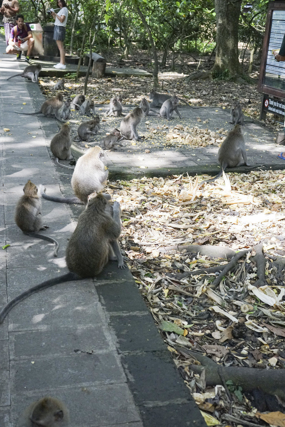 Visiting the Ubud Monkey Forest - Shannon Did What?