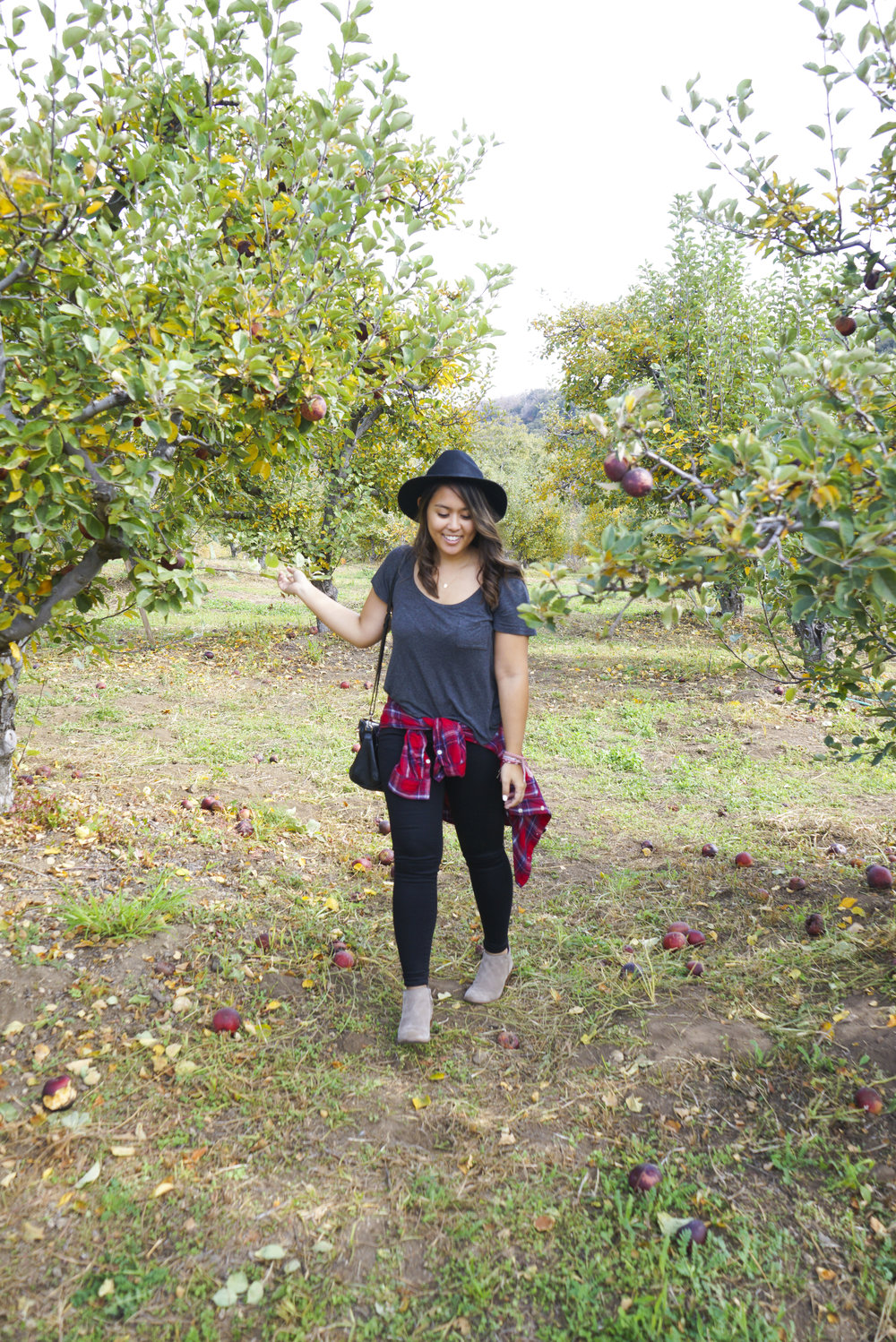 Apple_Picking_002.jpg