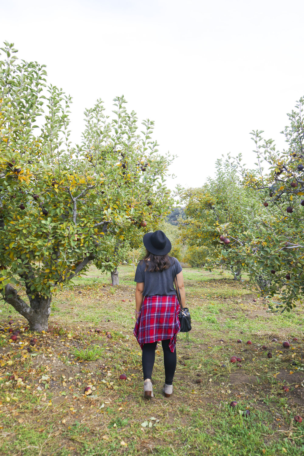 Apple_Picking_003.jpg