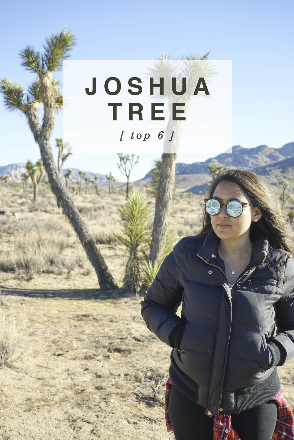 Joshua Tree: Top 6 | Shannon Did What?
