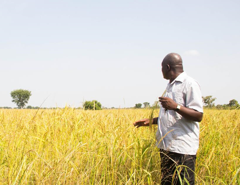 Abdul, a rice and maize farmer, is struggling to adapt to environmental changes in Northern Ghana.