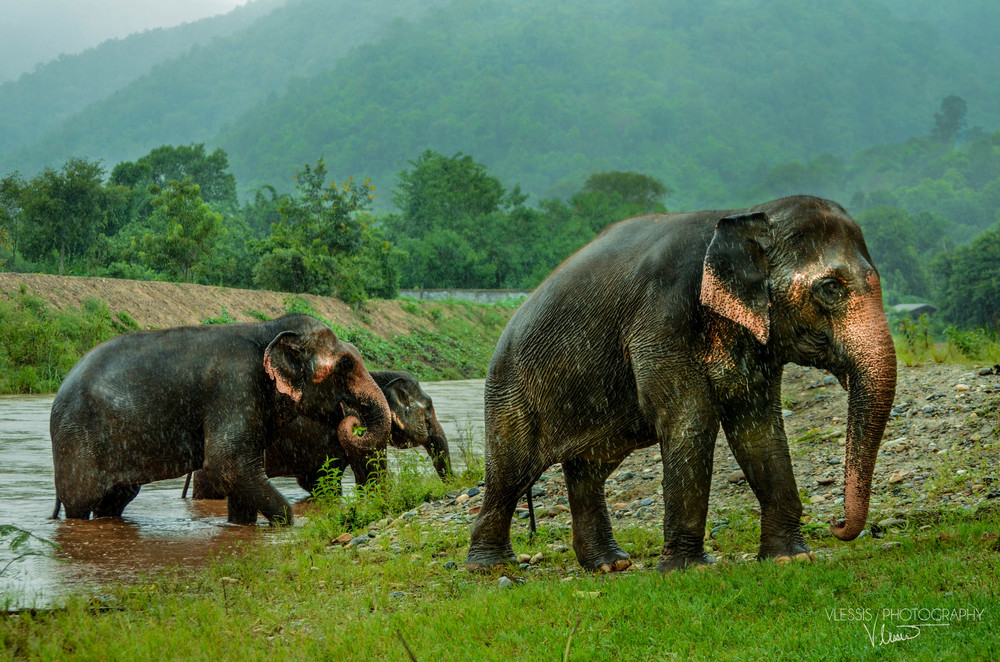 Thailand (1 of 1)-7.jpg