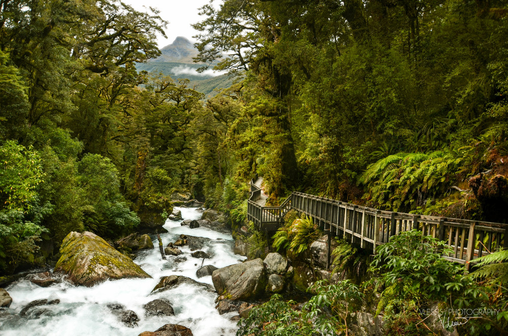 NZ (1 of 1)-6.jpg