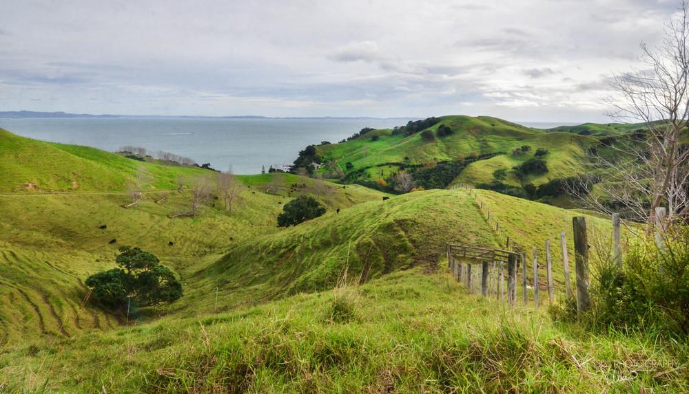 NZnorthisland (1 of 1).jpg